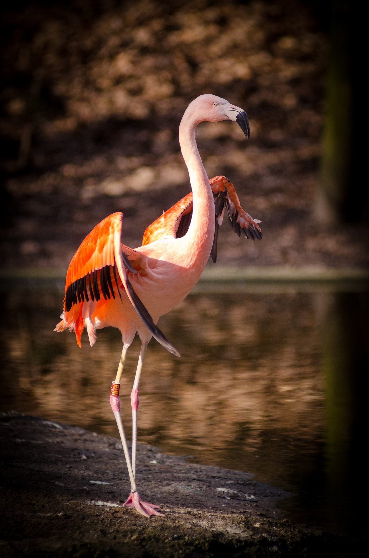 photo of a pink flamingo