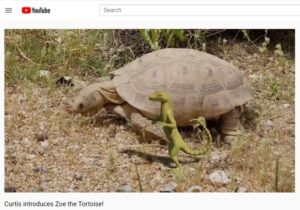 image of Zoe tortoise