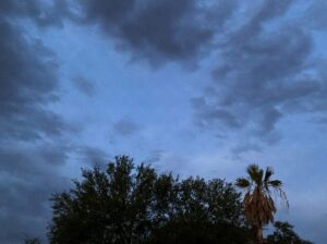 Picture of sky at dusk with treetop