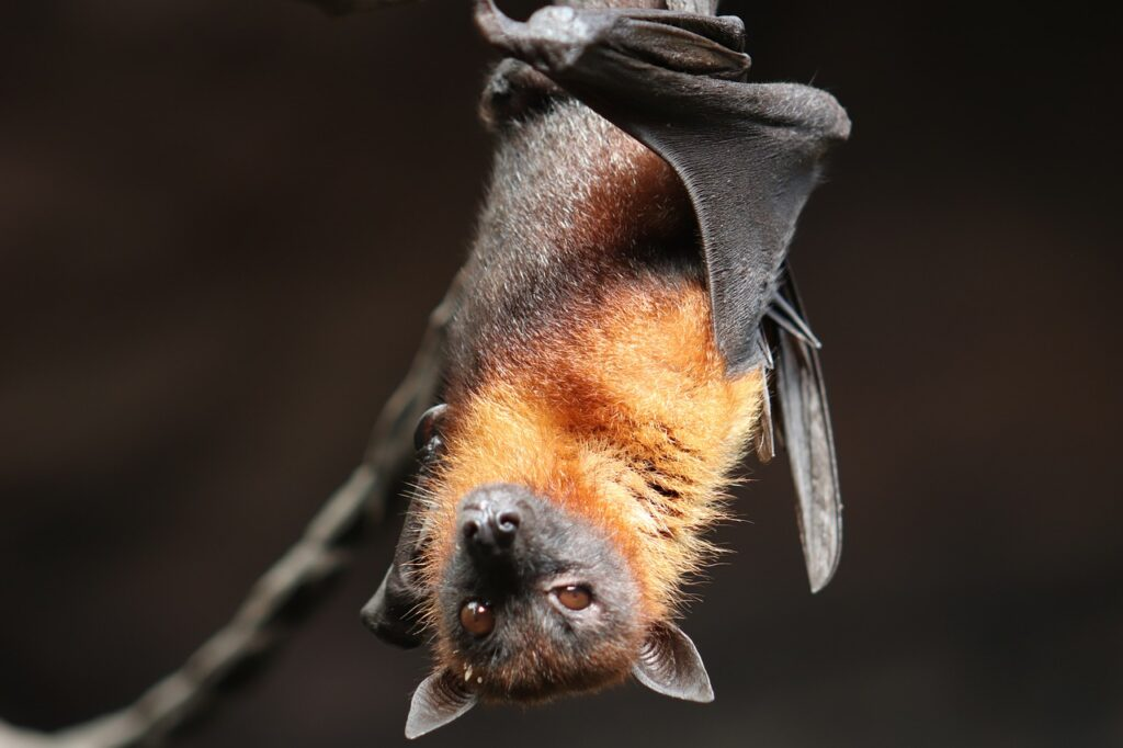 Image of bat