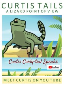 an illustration of Curtis curly-tail lizard advertising his You Tube page