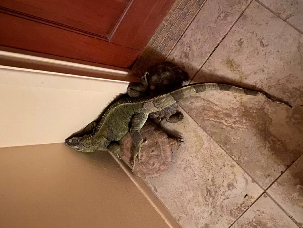Did You Know Reptiles Have Sleepovers?