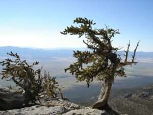 a photograph from a mountain overlooking the Great Basin