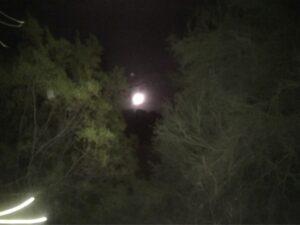 Full moon peeking between trees