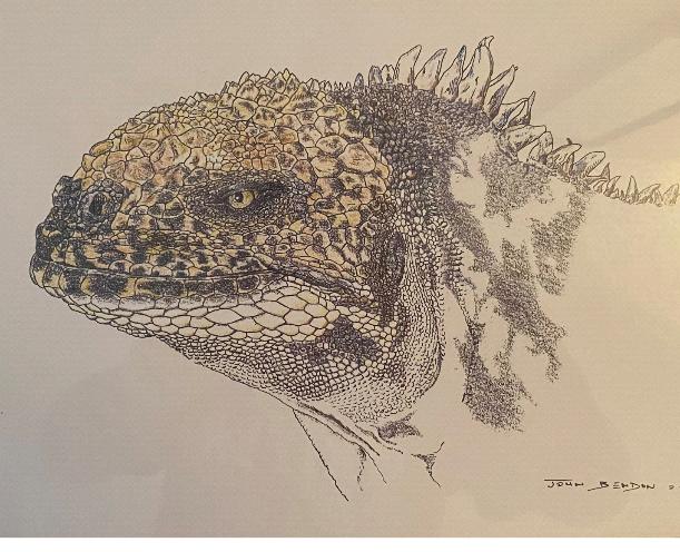 Illustration of hybrid iguana, by John Bendon
