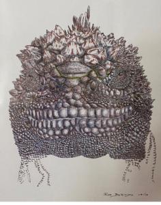 illustration of a marine iguana by John Bendon