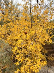 photo of golden pomegranate tree